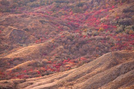 autumn trees on the mountain hills. Kara dag, Crimea, Ukraine photo