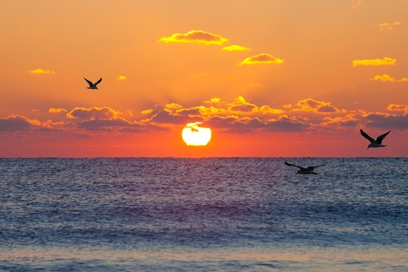 Red rising sun above the dark blue sea with seagulls Stockfoto