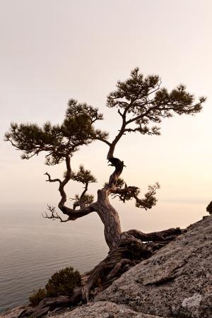 Eenzame juniper boom bij zonsondergang. Krim, Oekraïne Stockfoto