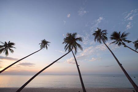 Palm trees at sunrise. Koh Samui, Thailand photo