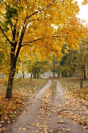 autumn scene: Road through the autumn forest