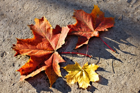 yellow and red autumn leaf on asphalt background photo