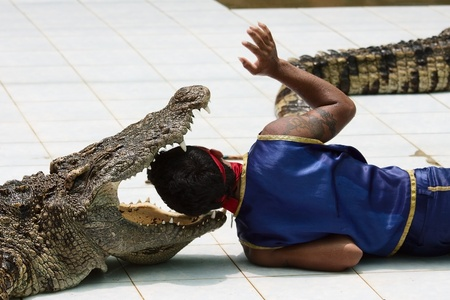 KOH SAMUI, THAILAND - JULY 11: Crocodile wrestler performing a show in July 11, 2011 in Koh Samui, Thailand.