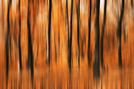 Motion blured background of autumn forest photo