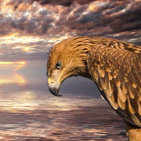 Close up hawk portrait over sunset seascape background