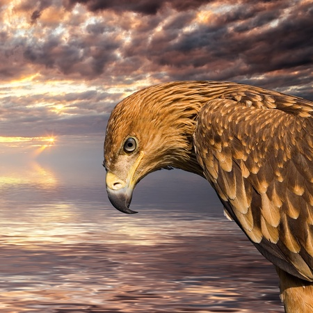 Close up hawk portrait over sunset seascape background