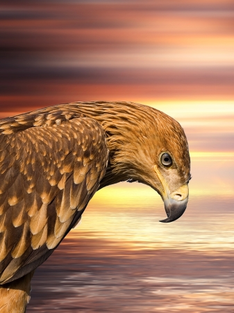 Hawk portrait over colorful water and sky abstract background