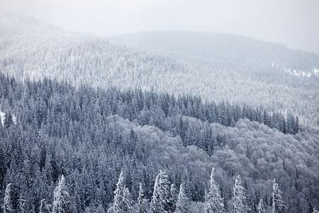 Winter berg bos. Great Smoky Mountain National Park, Tennessee, USA Stockfoto