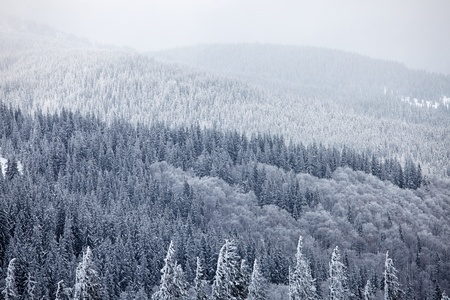 Winter mountain woods. Great Smoky Mountain National Park, Tennessee, USA