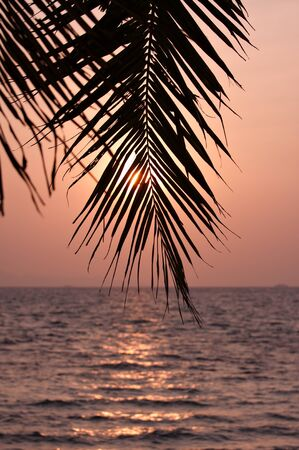 Palm leaves silhouette over sunset photo