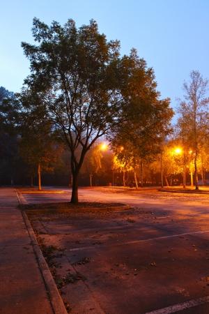 Early morning park photo