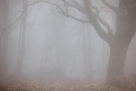 Herfst bos bij mistig weer