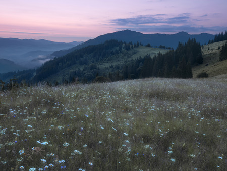 fense: Mountains rural landscape before sunrise. Carpathian mountains, Ukraine