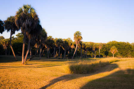 tybee island: Beautiful park summer view