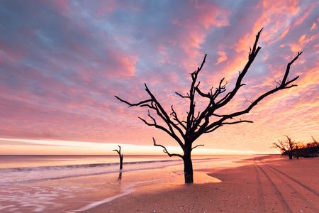 botanika: Botany Bay beach při zatažené západu slunce, Edisto Island, Jižní Karolína, USA