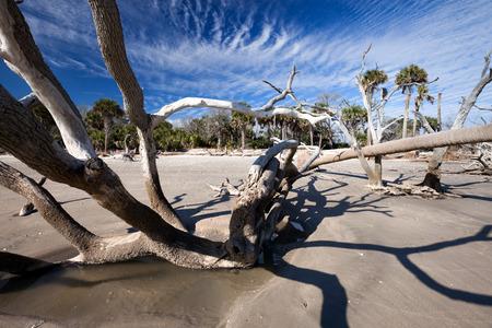 botanika: Botany Bay beach, Edisto Island, Jižní Karolína, USA