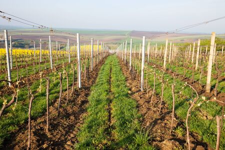 vinery: Vineyard Stock Photo