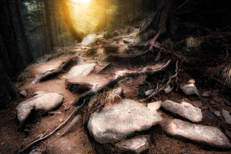 mystical forest: Old mystical forest