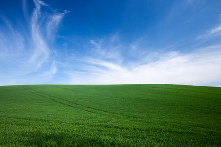 blue green background: Green grass over blue sky background Stock Photo
