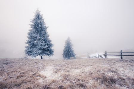 ukraine: Winter Carpathian mountains, Ukraine Stock Photo