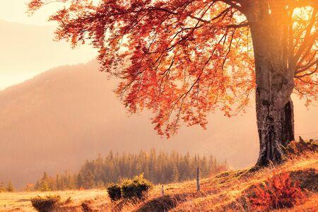 Vintage-Stil Foto von Herbstfarben Baum Standard-Bild
