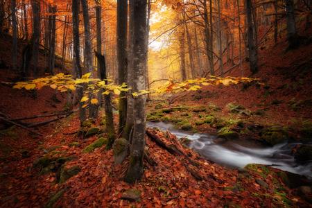 Herbstfarben Wald und kleiner Bach