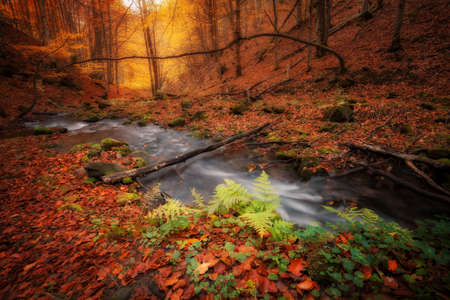 autumn colors: Autumn colors forest and small creek