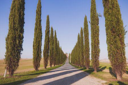 orcia: Tuscany cypress alley at sunny day. Tuscany, Italy, Europe. Stock Photo