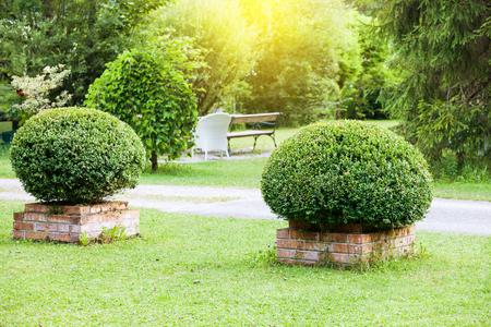 Summer garden Stock Photo