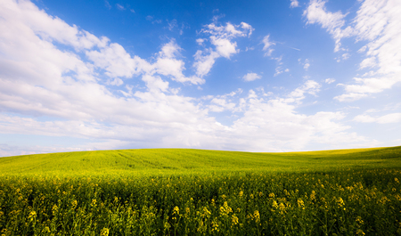 Beautiful summer field at sunny day