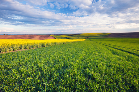 Beautiful field landscape Stock Photo