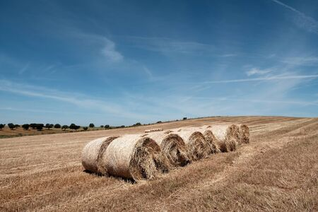 harvested: Countryside summer landscape. Farm field and harvest view Stock Photo