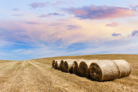 harvested: Farmland countryside landscape. Field of harvest wheat and straw bale Stock Photo