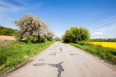 rural asphalt road among the spring sunny field Stock Photo