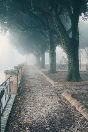foggy romantic alley in a park. Misty morning city park