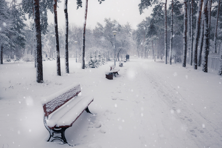 Benches in winter snowy park at snowfall day