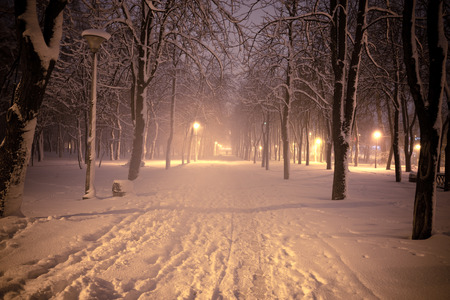 Night winter landscape. Snowy alley of city illuminated park