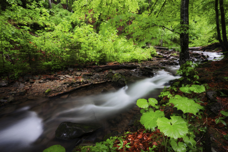Stream in beautiful green summer deep forest. Smoky mountains national park, Tennessee, USA
