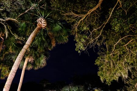 Palm trees under the stars. Night tropical beach view Stockfoto