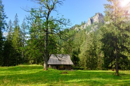 wooden house in the austrian alpine forest. Summer sunny landscape