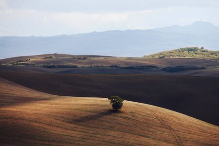 Cypress trees on the field in Tuscany, Italy at sunset. Tuscany classical landscape
