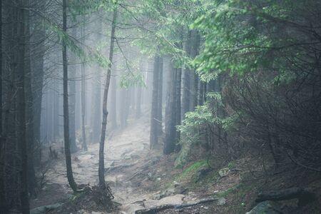hiking rocky path trail in foggy misty moody woodland Stockfoto