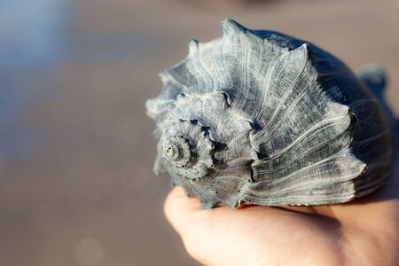 close up of big seashell in a female hand