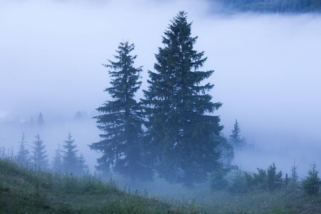 Misty landscape with fir mountain forest. Panoramic view of mountain woodland before sunrise Stockfoto