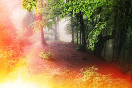 Fire in the green forest. A lot of smoke and fire. Stock Photo