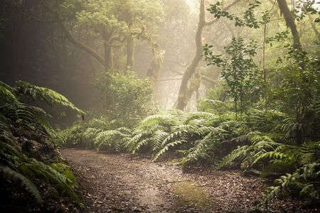 path through a dark forest. Misty woodland landscape