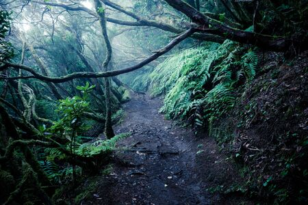 Dark foggy forest and path through it. Wild woodland nature background Banque d'images