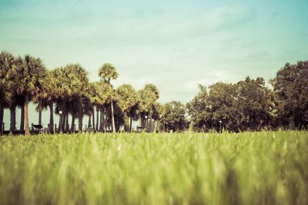 Green spring park with fresh grass, trees, palms. Beautiful nature background Banque d'images - 144174227