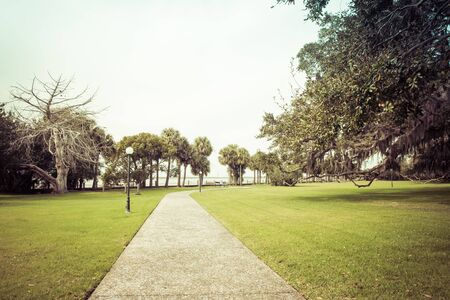 Green spring park with fresh grass, trees, palms. Beautiful nature background Banque d'images - 144173986