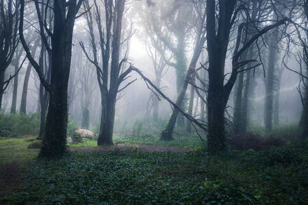 Beautiful mystical forest in a summer morning. Scenery with path in dreamy foggy forest